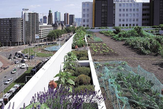 Ekologiczne dachy zielone