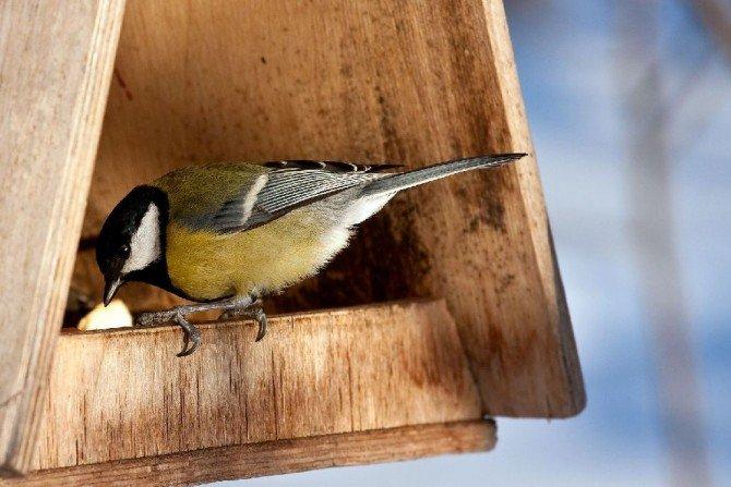 Zbuduj karmnik dla ptaków