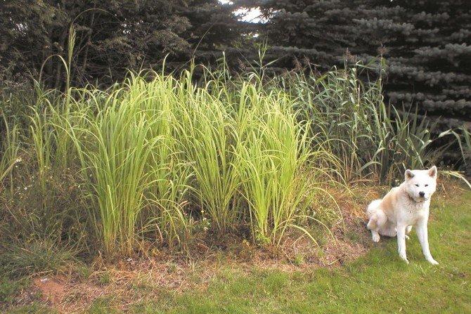 Roślinno-gruntowa przydomowa oczyszczalnia ścieków