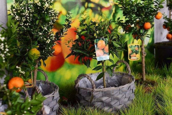 Jak urządzić ogród w stylu hiszpańskim