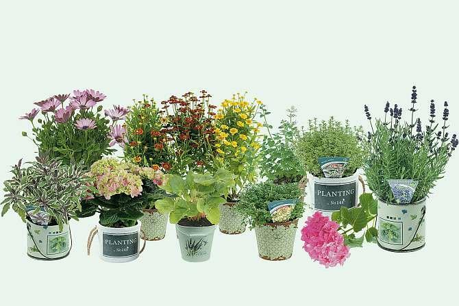 Jak urządzić ogród w stylu śródziemnomorskim