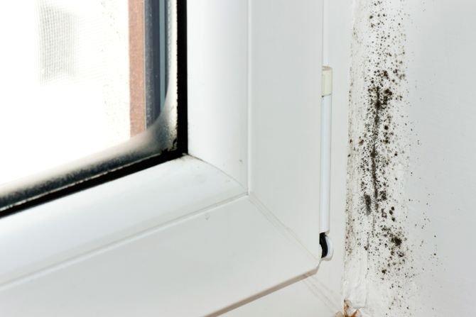 Jak się pozbyć grzyba z łazienki?