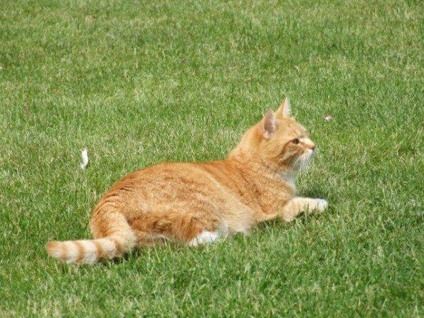 Dziś trochę o trawniku
