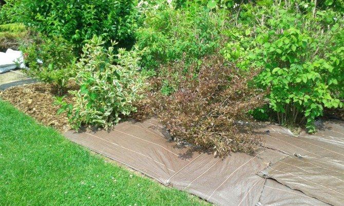 Ściółkowanie gleby - jaka grubość warstwy kory