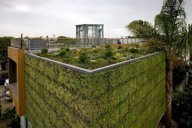 Nie tylko na dachu da się posadzić roślinność