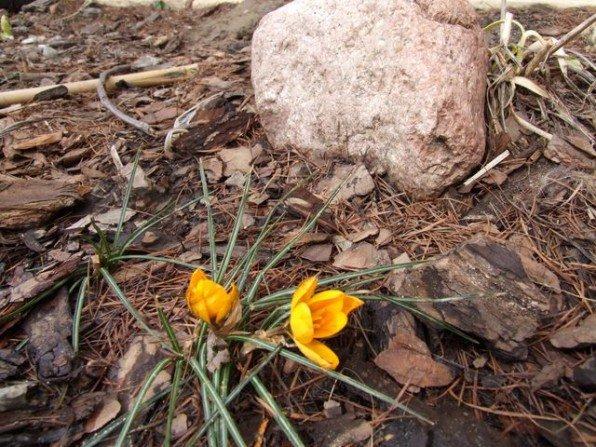 W ogrodzie powiało wiosną