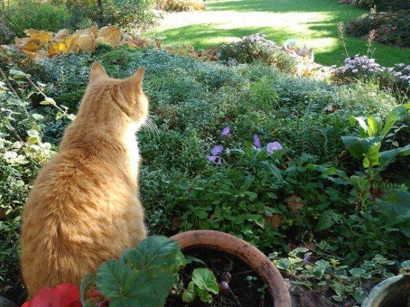 Jesienny ogród