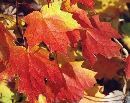 Czerwień - kolor jesieni...