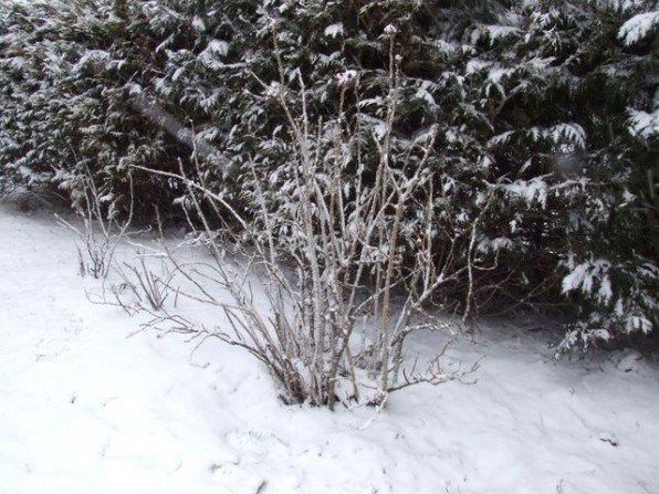 Śnieżny Wielki Piątek