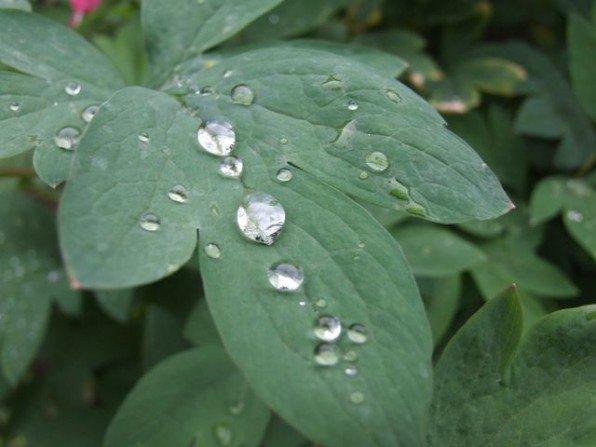 Podlewanie ogrodu deszczówką