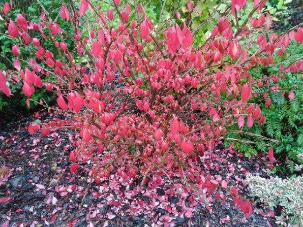 W ogrodzie nastała jesień, czas na porządki