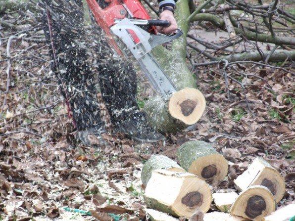Wycinamy drzewo