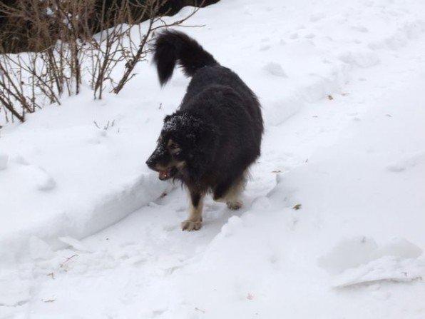 Zadbaj o zwierzaki jesienią i zimą