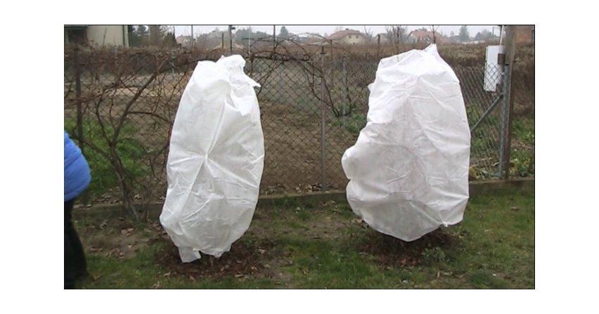 Krzewy ubrane na biało