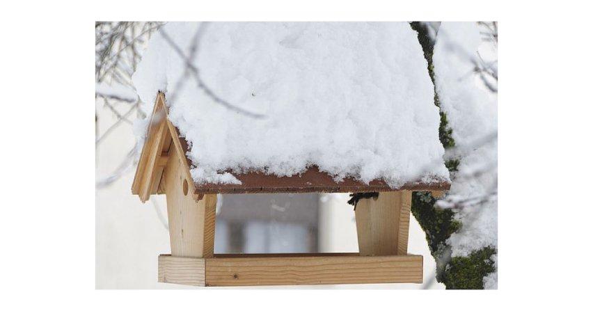 Jak odnowić domki dla ptaków