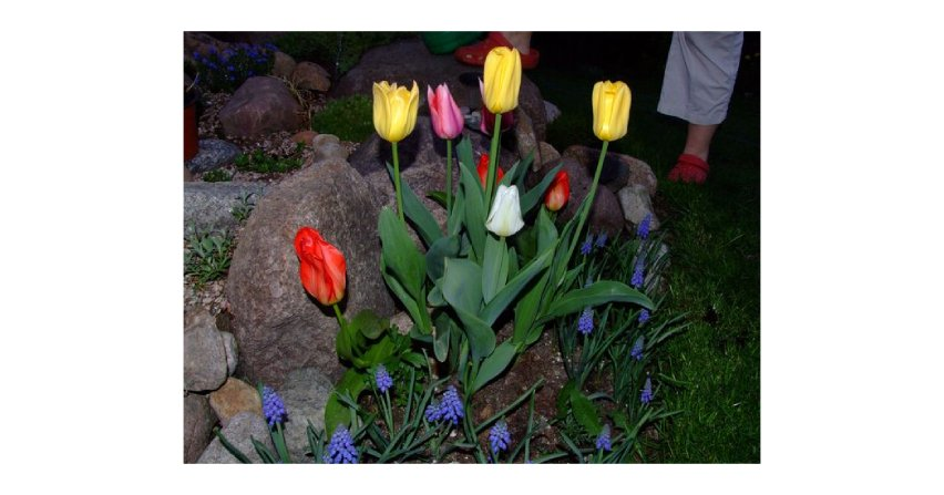 Kwiaty o zmierzchu