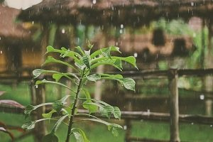 Jak dobrze wykorzystać deszczówkę?