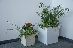 Kompozycje roślin oczyszczające powietrze w domu i biurze