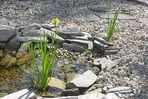 Ozdobne zbiorniki retencyjne – stawy, sadzawki, oczka wodne, kaskady, strumienie, ogrody deszczowe
