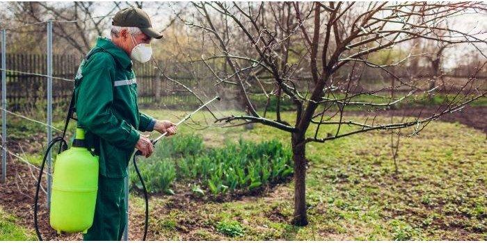 Jak zwalczać choroby grzybowe w ogrodzie bez użycia chemii?