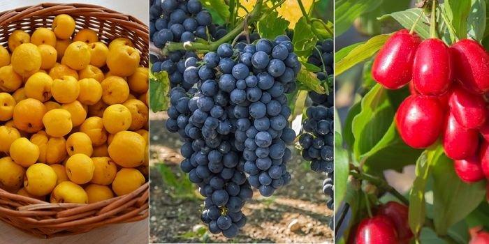 Owoce z własnego ogrodu