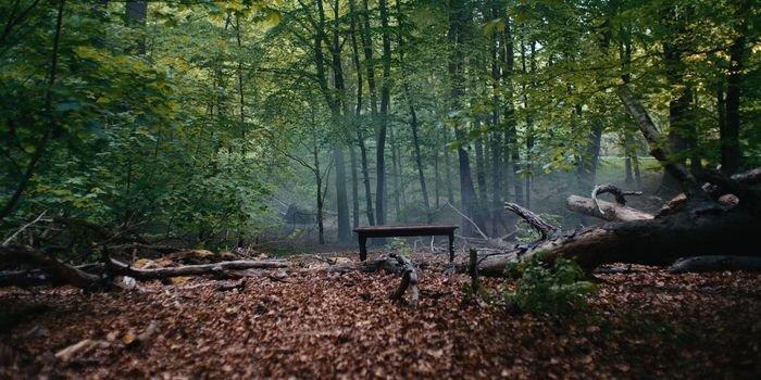 Grupa VELUX i WWF razem dla ochrony lasów