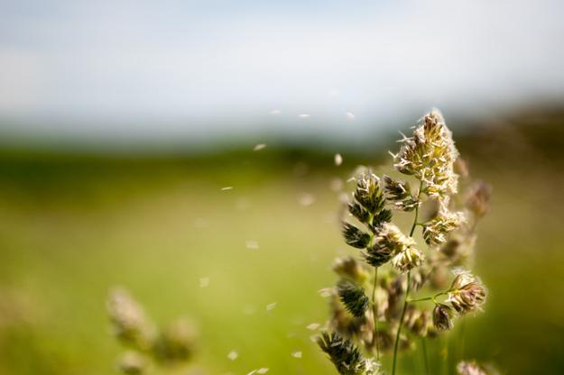 Naturalna wentylacja przyjazna alergikom i nie tylko