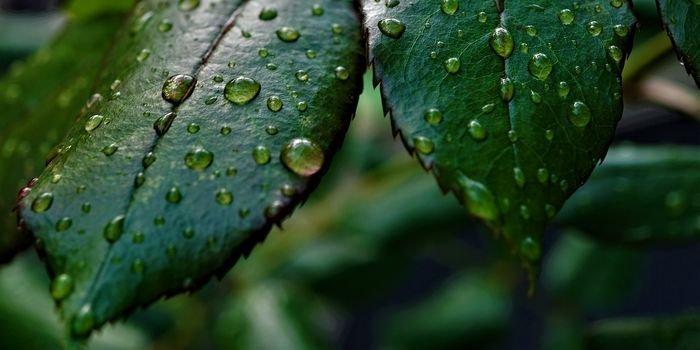 NCBR chce racjonalnie zarządzać deszczówką