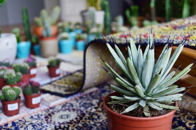 Agawy lub mniejsze kaktusy - rośliny charakterystyczne dla tego stylu ...