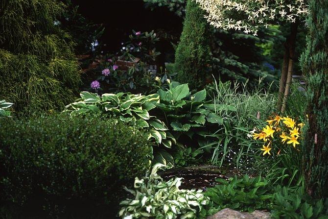 Wspaniale rozrośnięte różnolistne funkie, pomarańczowy liliowiec oraz konwalie to z pewnością grupa długowiecznych bylin Fot. Jadwiga Litke