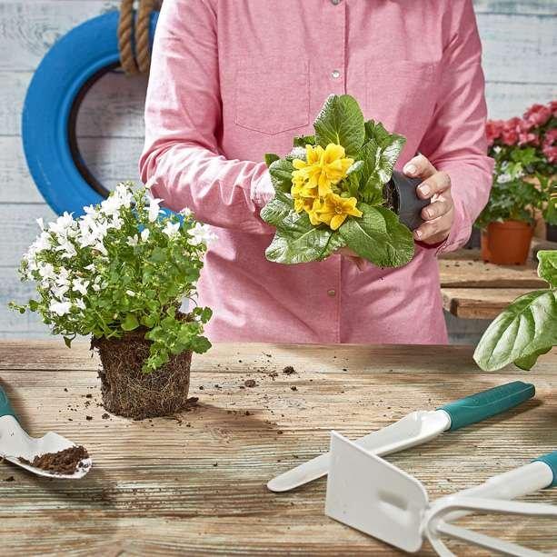 Krok 5: Przygotuj rośliny do posadzenia w kwietniku - pnącza, kwiaty i rośliny wiszące