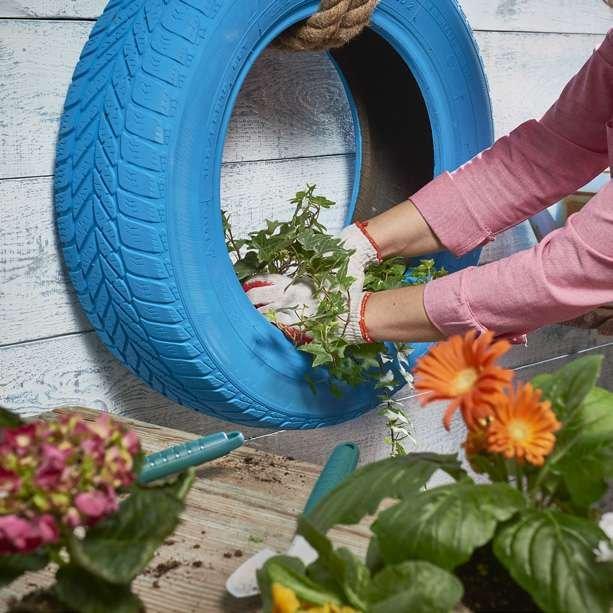 Krok 7: Posadź wybrane kwiaty w oponie, mogą być całoroczne lub sezonowe