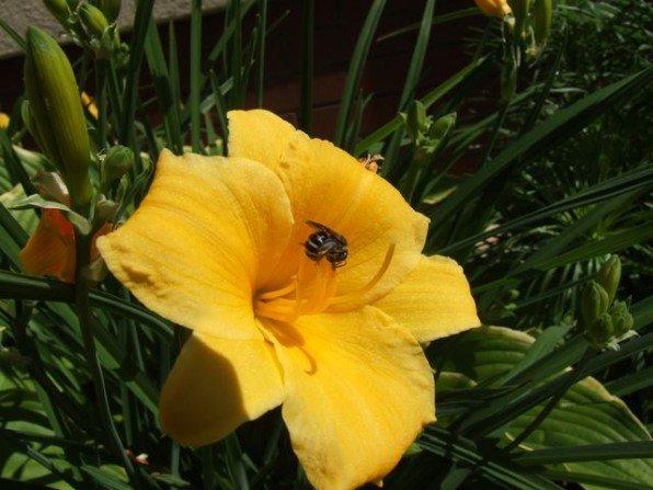 Z podlewania ogrodu cieszą się nie tylko rośliny i my Fot. Franciszek Rochowczyk