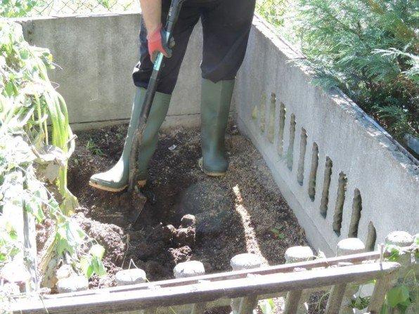 Wybieranie kompostu z kompostownika Fot. Franciszek Rochowczyk