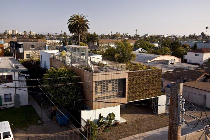 roslinnosc na dachu
