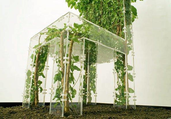 ogrod budynek rosliny