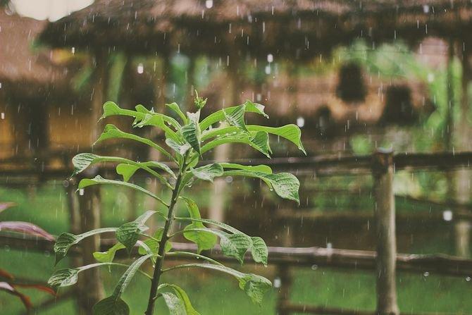 Dlaczego warto zbierać deszczówkę? Fot. Mike Kotsch