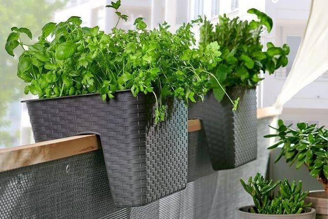 Ogródek warzywny na balkonie – jak go założyć i co można uprawiać? Fot. Leroy Merlin